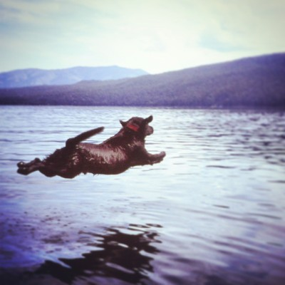 Bear jumping to fetch a ball.